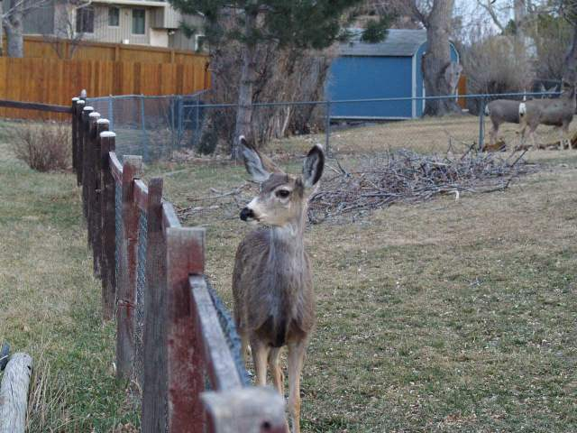Deer came right up to the fence.