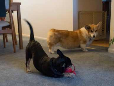 At first, Darwin wasn't sure he wanted to play with Tegan.
