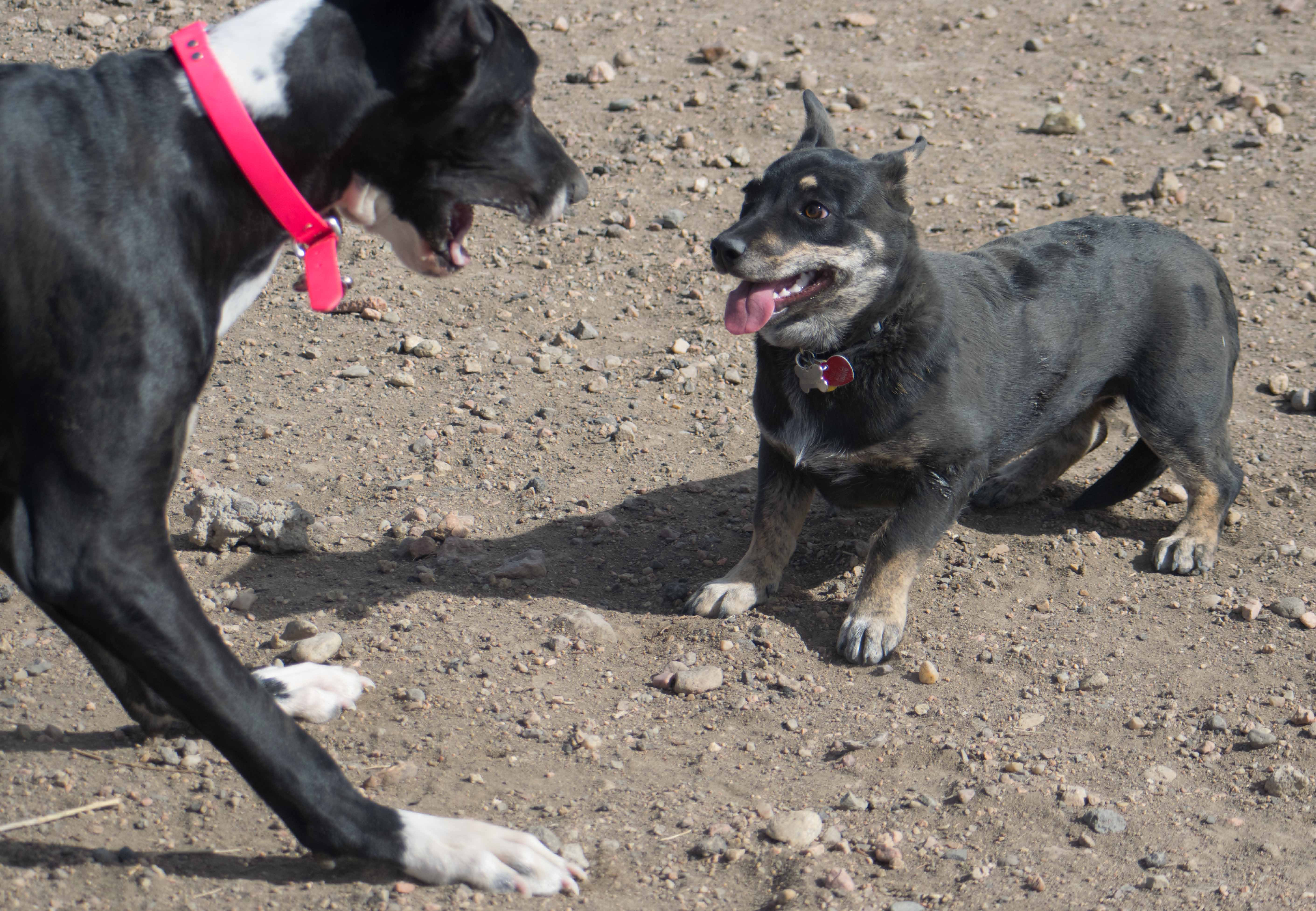 Viva and Tegan at the dog park-05-1.jpg