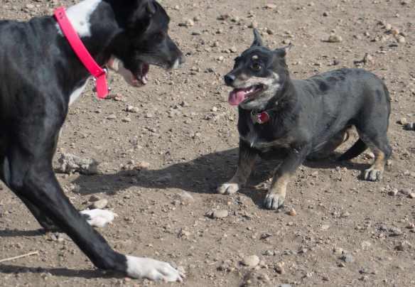 Viva and Tegan at the dog park-05-1.jpg