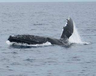 Whale Roll 8x10