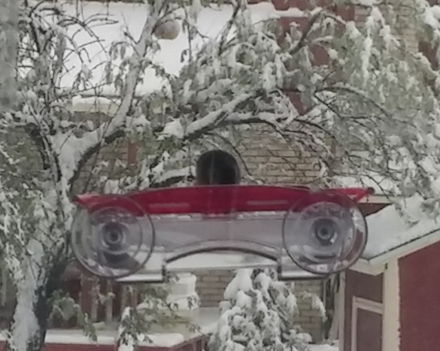 hummer at feeder in storm_edited-1