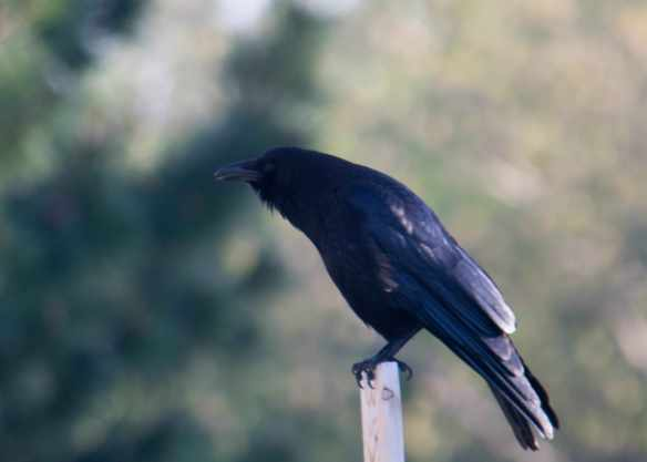 Raven-2_edited-1