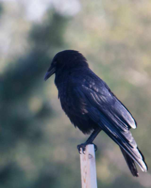 Raven-4_edited-1