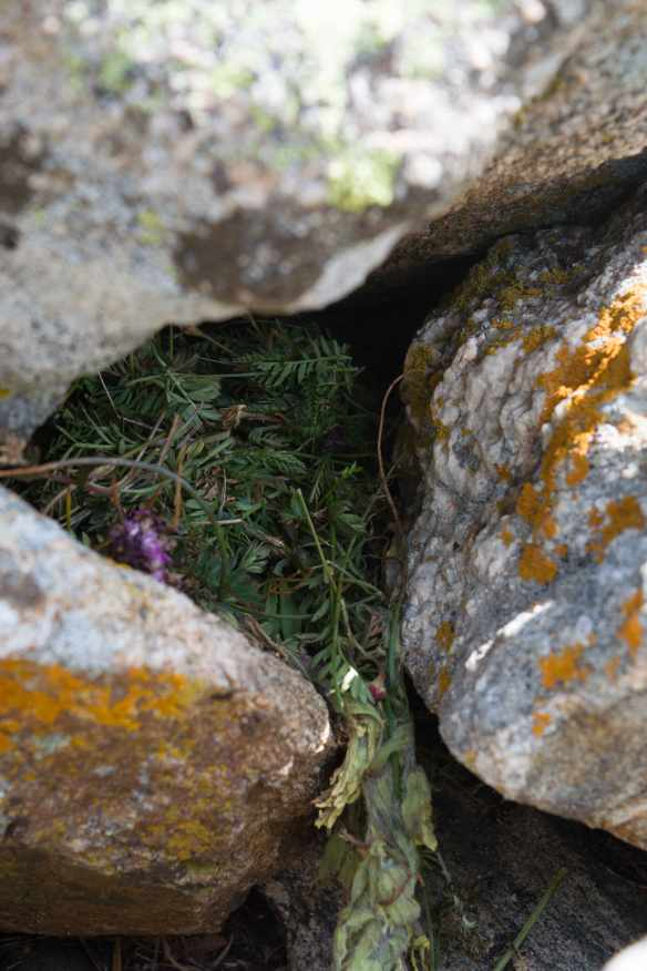 Pika nests-09