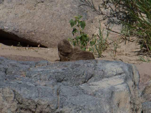 Otter dust bath-3