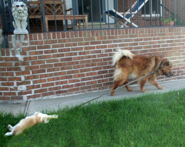 Darwin holding Kuramas leash ed 2