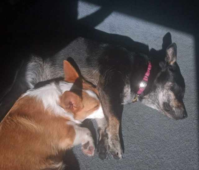 Zoe keeping her nose warm under Tegan.jpg