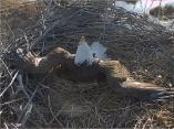 Screenshot_2019-02-24 Xcel Energy Bird Cam(3)_edited-1
