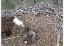 Screenshot_2019-04-18 Xcel Energy Bird Cam(1)